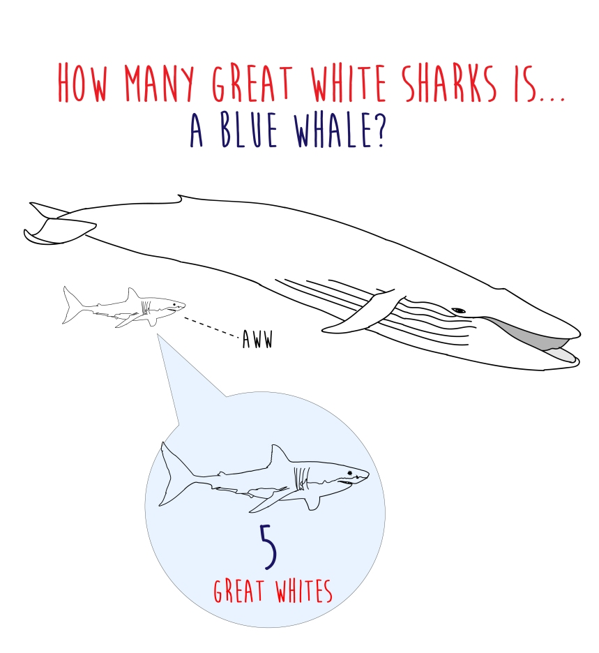 how many great white sharks is a blue whale
